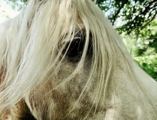 Game of Thrones E5/S8 –  Se valkoinen hevonen